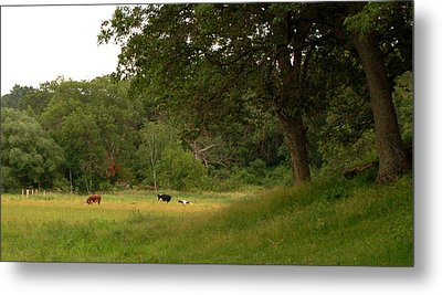 The Pasture Metal Print by Lisa Patti Konkol