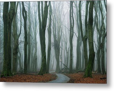 The Path Metal Print by Martin Podt
