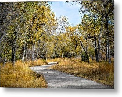 The Path Metal Print by Michael  Brungardt