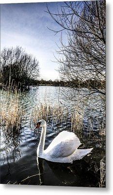 The Peaceful Swan Metal Print by David Pyatt