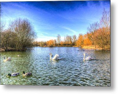 The Peaceful Swan Lake Metal Print by David Pyatt