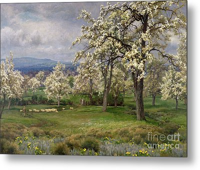 The Pear Orchard Metal Print by Alfred Parsons