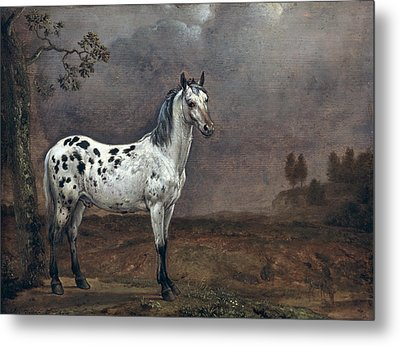 The Piebald Horse Metal Print by Paulus Potter