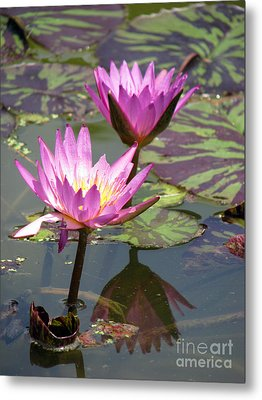 The Pond Metal Print by Amanda Barcon