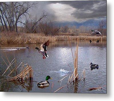 The Pond Metal Print by Bill Stephens