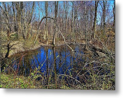The Pond Metal Print by Lanis Rossi