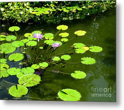 Metal Print featuring the photograph The Pond by Robert D McBain
