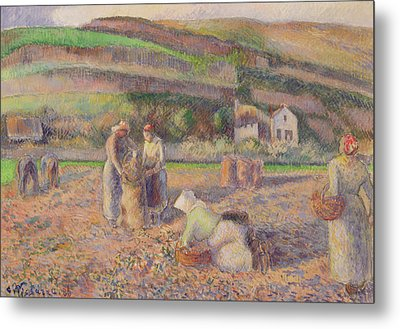 The Potato Harvest Metal Print by Camille Pissarro