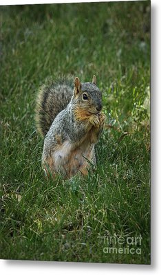 The Praying Squirrel Metal Print