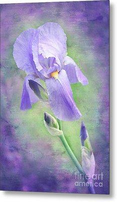 The Purple Iris Metal Print