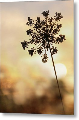 Metal Print featuring the photograph The Queen At Sunrise by Lori Deiter