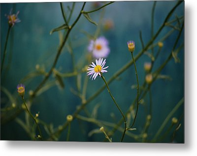 Metal Print featuring the photograph The Quiet Aster by Douglas MooreZart