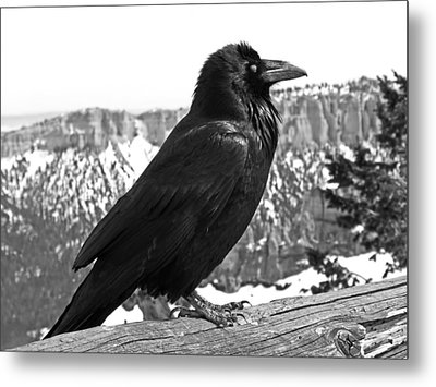 The Raven - Black And White Metal Print