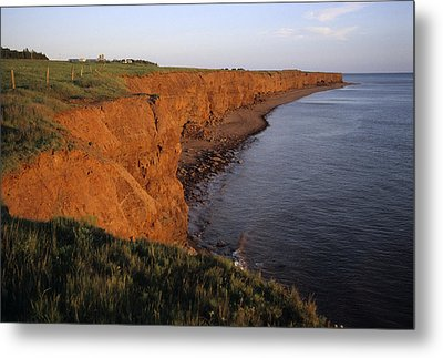 The Red Cliffs Of Prince Edward Island Metal Print by Taylor S. Kennedy