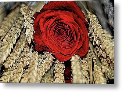 Metal Print featuring the photograph The Red Rose On A Bed Of Wheat by Diana Mary Sharpton