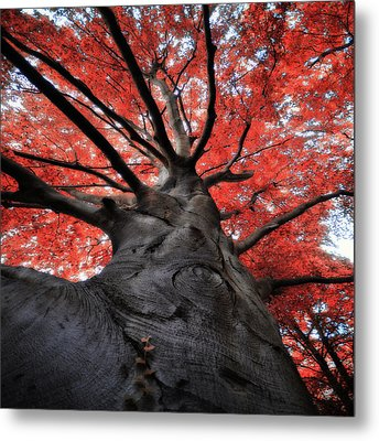 The Red Tree Metal Print by Philippe Sainte-Laudy Photography