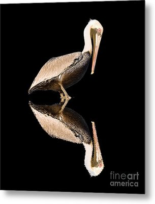 The Reflection Of A Pelican Metal Print
