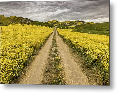 Metal Print featuring the photograph The Road Less Pollenated by Peter Tellone