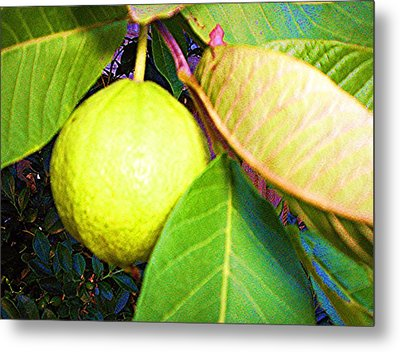 The Rose Apple Metal Print