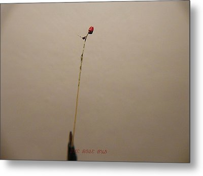 Metal Print featuring the sculpture The Rose Bud by Phillip H George