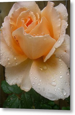 The Rose Metal Print by Kimberly Morin