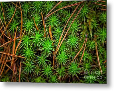 The Scent Of Pine Forest IIi Metal Print