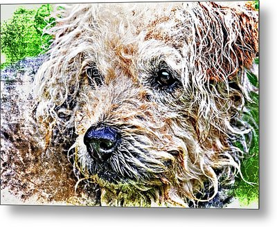 The Scruffiest Dog In The World Metal Print by Meirion Matthias