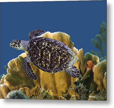 Metal Print featuring the photograph The Sea Turtle by Paula Porterfield-Izzo