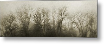 The Secrets Of The Trees Metal Print by Scott Norris