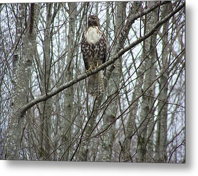 The Sentinel Metal Print by Laurie Kidd