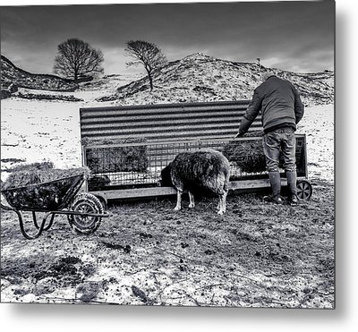 Metal Print featuring the photograph The Shepherd by Keith Elliott