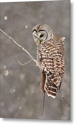 The Silent Hunter Metal Print by Mircea Costina Photography