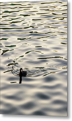 The Simple Life Metal Print by Alex Lapidus