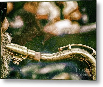 The Snake  Metal Print by Steven Digman