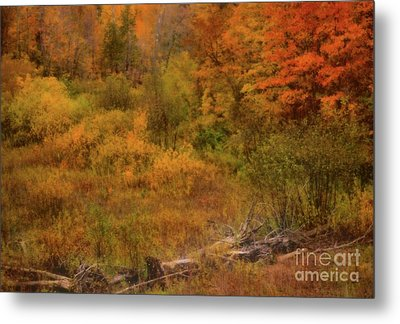The Soft Colors Of Autumn Metal Print by Matthew Winn