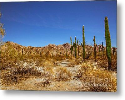The Sonoran Desert Metal Print by Robert Bales