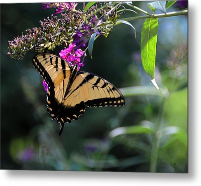 The Splendor Of Nature Metal Print by Gerlinde Keating - Galleria GK Keating Associates Inc