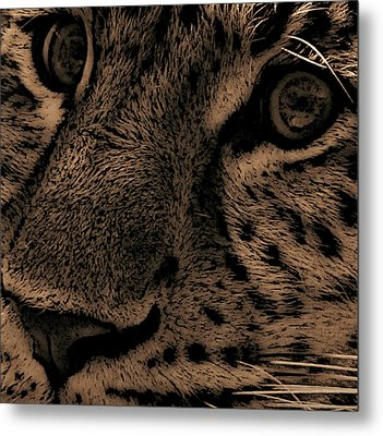 The Stare Metal Print by Martin Newman