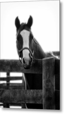 The Steed Metal Print by Wayne Stacy