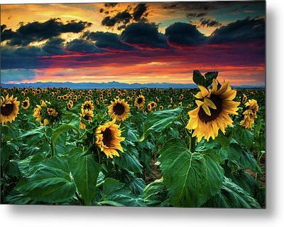 The Summer Winds Metal Print