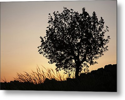 Sunset On The Hill Metal Print by Yoel Koskas