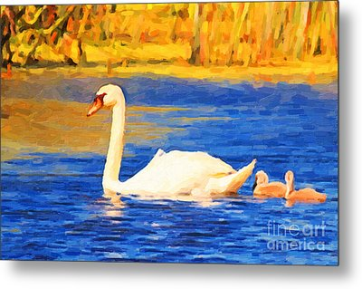 The Swan Family . Photoart Metal Print by Wingsdomain Art and Photography