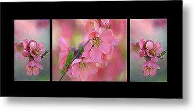 The Tender Spring Blooms. Triptych On Black Metal Print
