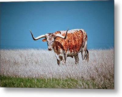 Metal Print featuring the photograph The Texas Longhorn by Linda Unger