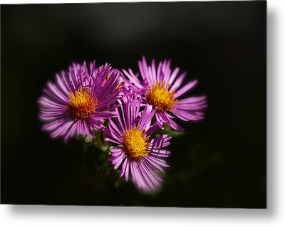Metal Print featuring the photograph The Three Daisies by Anthony Rego