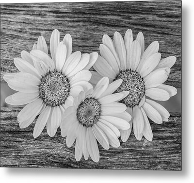 The Three Of Us Metal Print by Christina Lihani