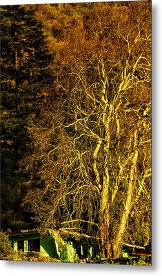 The Tree And The House Metal Print
