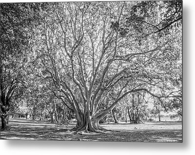 The Tree In The Middle Metal Print by Taschja Hattingh