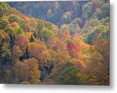 The Trees Of Autumn On The Blue Ridge Metal Print