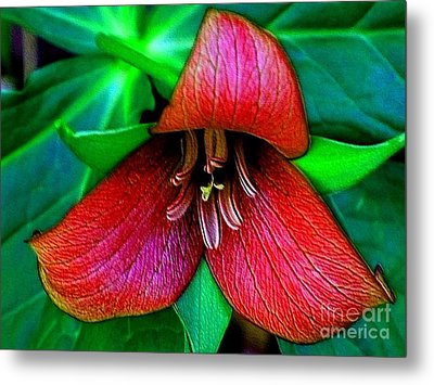 Metal Print featuring the photograph The Trillium by Elfriede Fulda